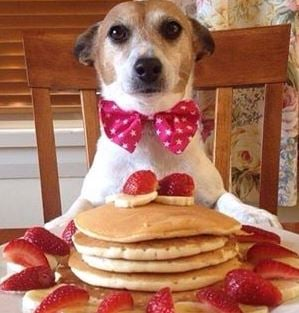 Click image for larger version.  Name:dogpancakes.JPG Views:22 Size:29.1 KB ID:176916