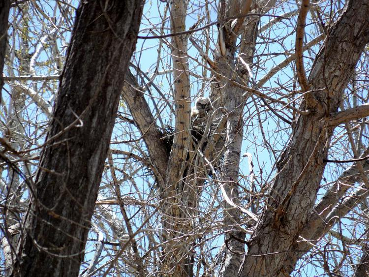 Any bird watchers out there?-owl.jpg