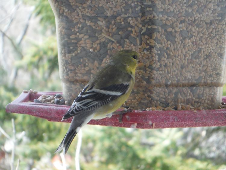 Any bird watchers out there?-dscf1110m.jpg