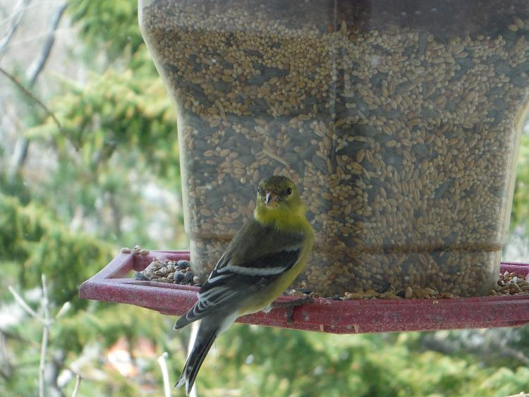 Any bird watchers out there?-dscf1113m.jpg