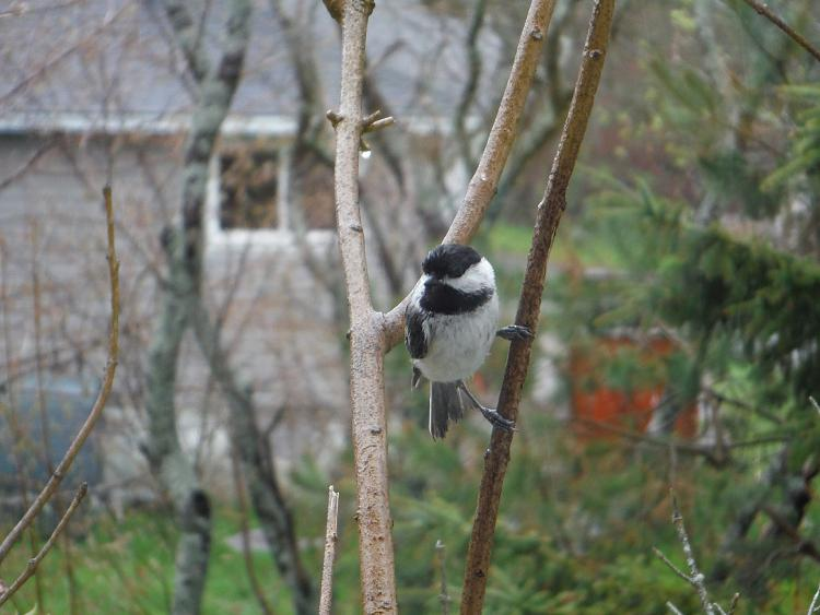 Any bird watchers out there?-dscf1123m.jpg