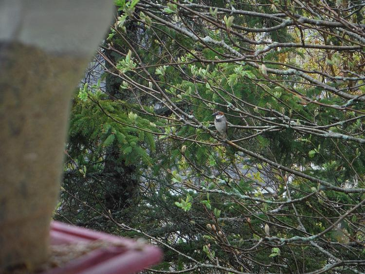 Any bird watchers out there?-dscf1124m.jpg