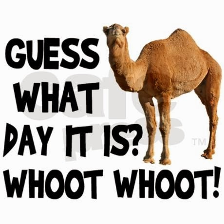 Click image for larger version.  Name:Guess What Hump day.jpg Views:91 Size:34.3 KB ID:191260