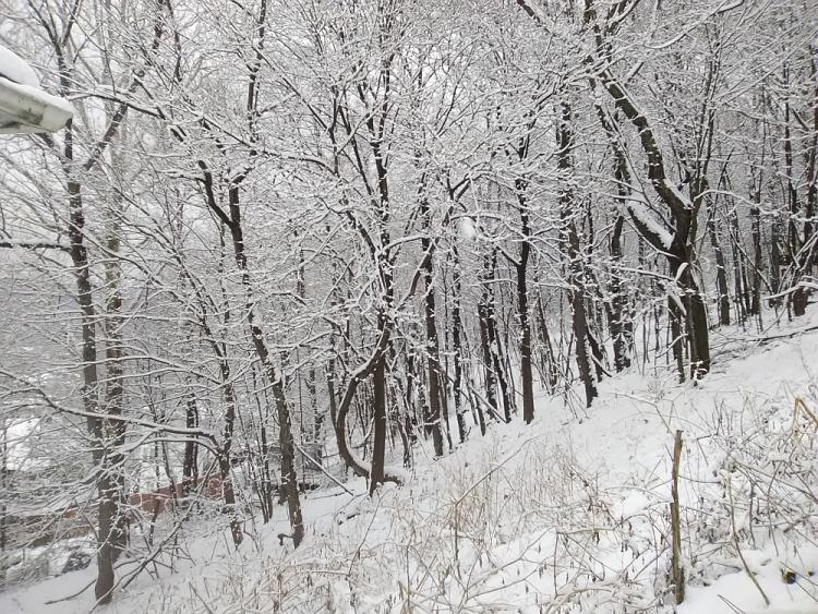 Click image for larger version.  Name:snow.jpg Views:4 Size:831.3 KB ID:220800