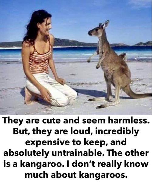 Funny Picture Thread [12]-kangaroo.jpg