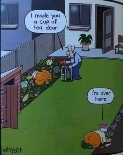 Funny Picture Thread [14]-cup-tea.jpg