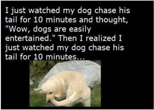 Funny Picture Thread [14]-dog-chasing-tail.png