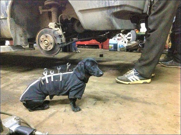 Funny Picture Thread [14]-doggie-toolbox.jpg