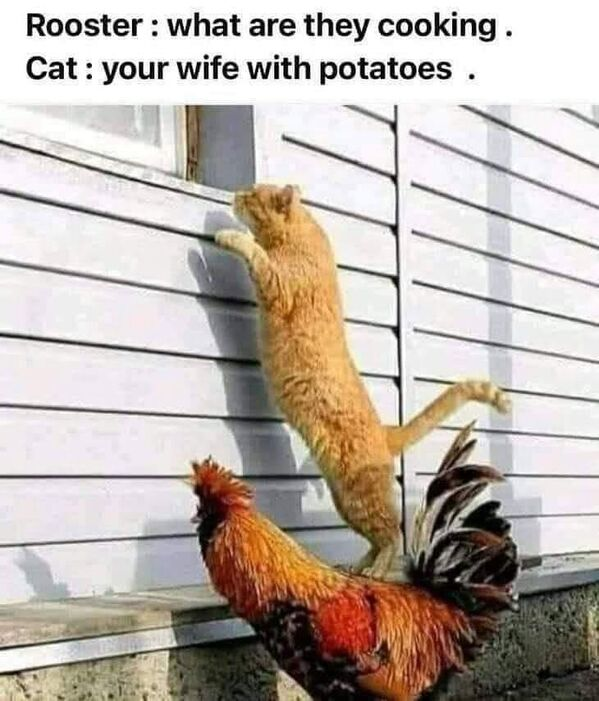 Funny Picture Thread [14]-gyt.jpg