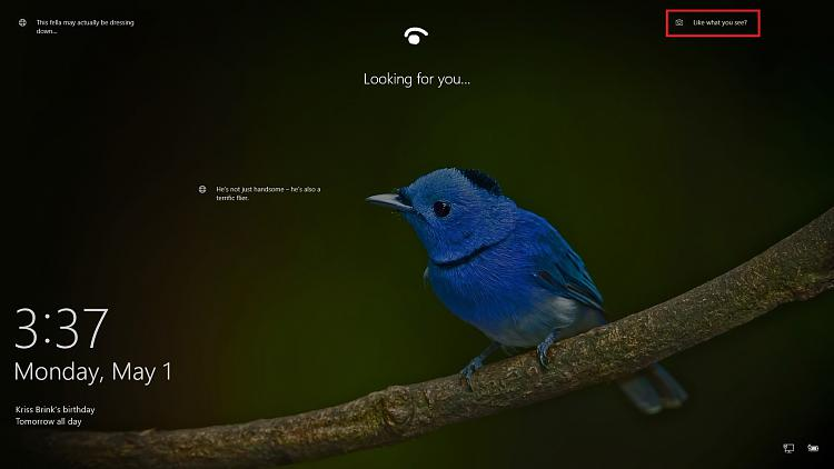 Click image for larger version.  Name:Windows_Spotlight.jpg Views:5 Size:211.4 KB ID:132940