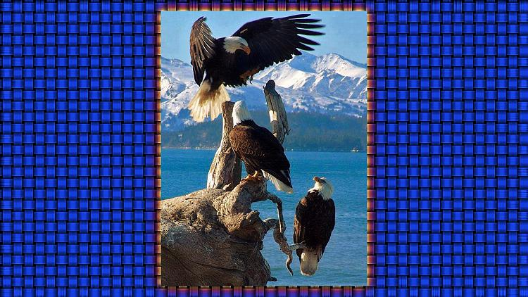 Click image for larger version.  Name:Jerry's Eagle Wallpaper.jpg Views:7 Size:314.3 KB ID:133938