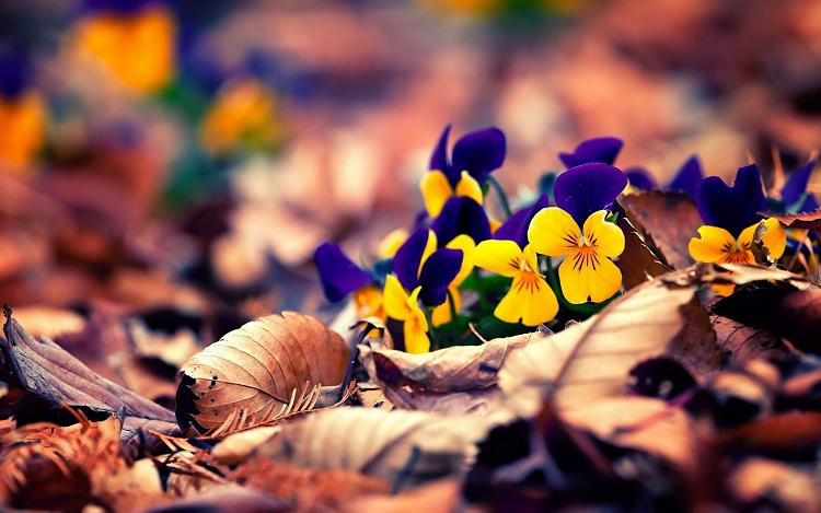 Click image for larger version.  Name:Windows-10-wallpaper-Flower2.jpg Views:13 Size:459.5 KB ID:144020