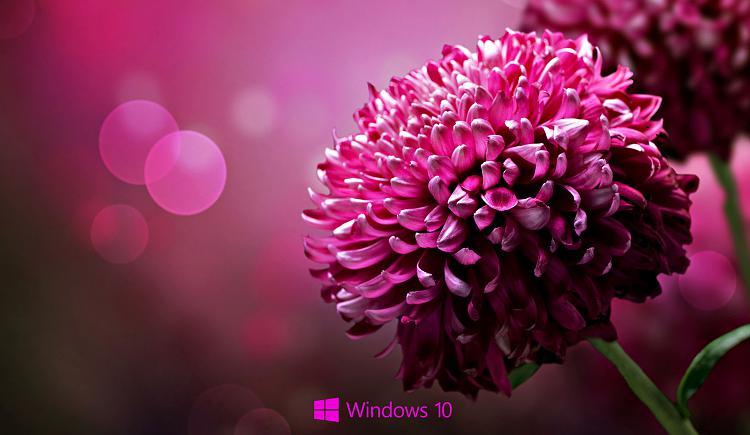 Some Windows 10 wallpapers-jzs82h.jpg