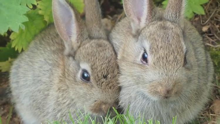 Click image for larger version.  Name:Bunnys.jpg Views:66 Size:716.9 KB ID:18657