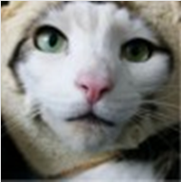 Click image for larger version.  Name:Cat Bread.png Views:10 Size:103.8 KB ID:61240