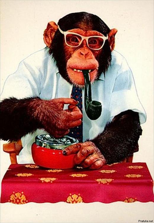 Click image for larger version.  Name:smoking_monkeys_01.jpg Views:27 Size:140.2 KB ID:9213