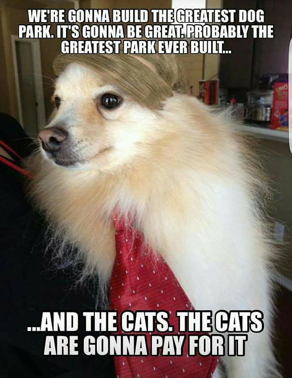 Click image for larger version.  Name:Dog Park.jpg Views:8 Size:205.0 KB ID:122823