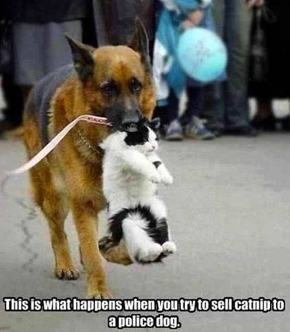 Click image for larger version.  Name:don't sell catnip to police dog.jpg Views:63 Size:52.5 KB ID:122825