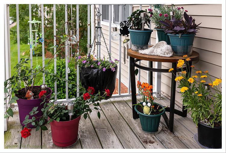 Hardware Thread 2020-patio-garden.jpg