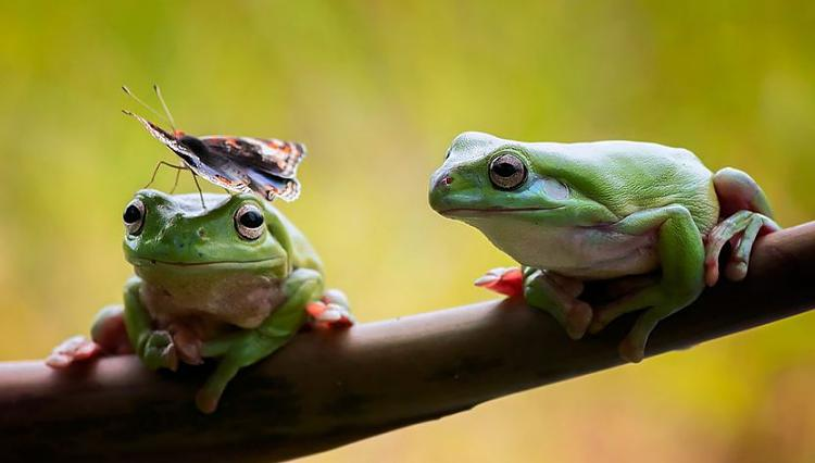 Click image for larger version.  Name:frog.JPG Views:6 Size:44.4 KB ID:30197