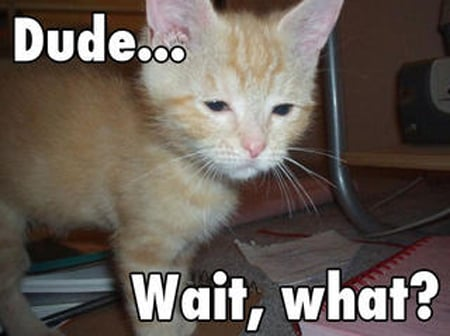 Click image for larger version.  Name:1642306-lolcats_dude_wait_what.jpg Views:84 Size:72.8 KB ID:100042
