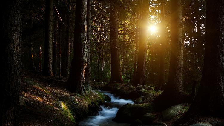 forest_water_stream-1920x1080.jpg