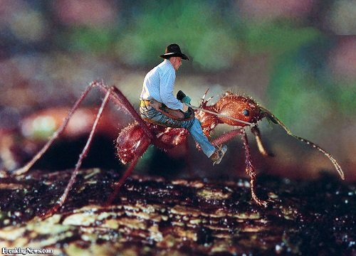 Click image for larger version.  Name:Man-Riding-a-Giant-Ant-small.jpg Views:134 Size:79.2 KB ID:143968