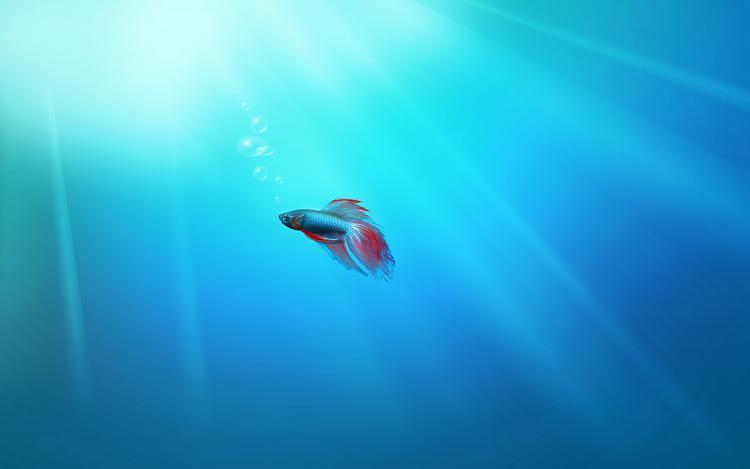 Click image for larger version.  Name:Beta Fish.jpg Views:1211 Size:640.7 KB ID:22507