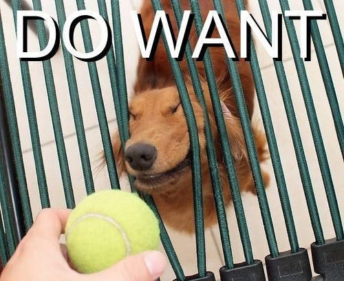 Click image for larger version.  Name:do-want-dog-pushing-through-bars-for-tennis-ball.jpg Views:127 Size:105.7 KB ID:93632